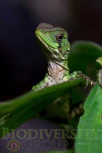 Biodiversity Group, _MG_8079