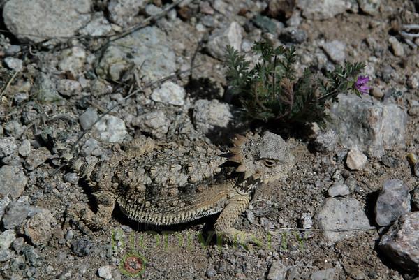 Biodiversity Group, IMGP2407