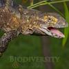 Biodiversity Group, _MG_3983
