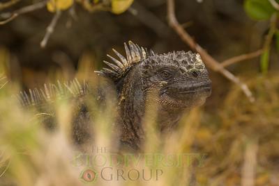Biodiversity Group, DSC02016