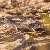 Biodiversity Group, _DSC7763