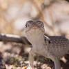 Biodiversity Group, _DSC7685