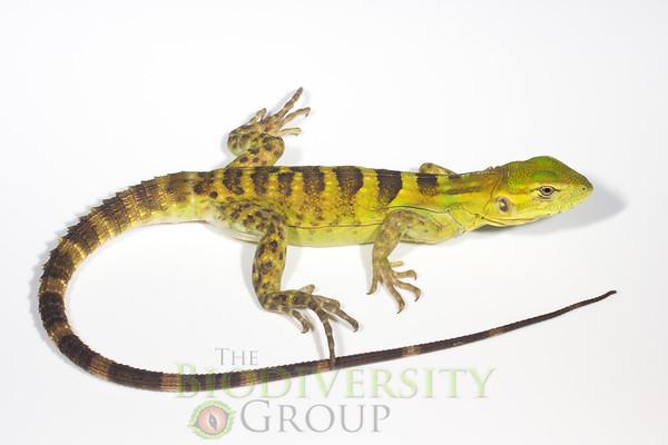 Biodiversity Group, _MG_4051