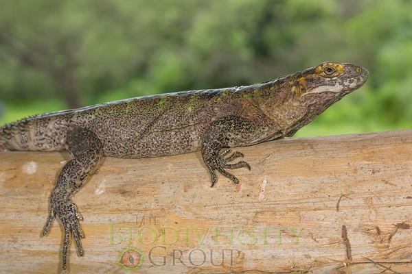 Biodiversity Group, _MG_4123