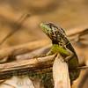 Biodiversity Group, _DSC1479