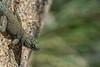 Biodiversity Group, DSC00733