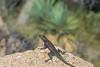 Biodiversity Group, DSC00714