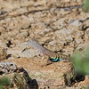 Biodiversity Group, _MG_3893