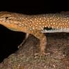 Biodiversity Group, IMGP6073
