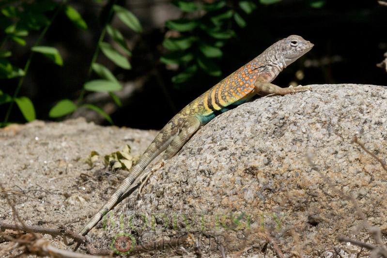 Biodiversity Group, _MG_3918