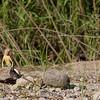 Biodiversity Group, IMG_4635