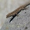 Biodiversity Group, Black Canyon City-0013