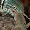 Biodiversity Group, Bahia Kino-0089
