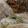 Biodiversity Group, _MG_3860