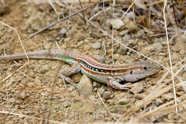 Biodiversity Group, _MG_4955
