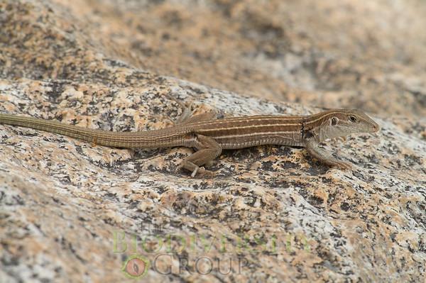 Biodiversity Group, PICT4248