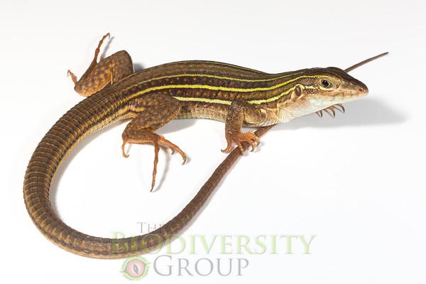 Biodiversity Group, _MG_4185