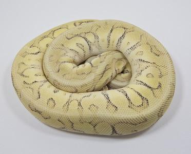 Rob Starzman Reptiles