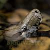 Biodiversity Group, DSC08736