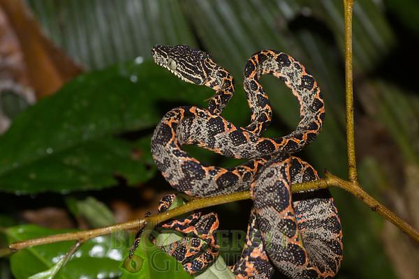 Biodiversity Group, DSC01255