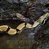 Biodiversity Group, DSC08645