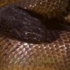 Biodiversity Group, PICT0401