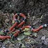 Biodiversity Group, DSC03307