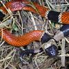 Biodiversity Group, IMG_4317