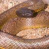 Biodiversity Group, PICT0398