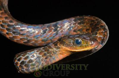 Biodiversity Group, DSC_0504