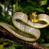 Biodiversity Group, _MG_0465