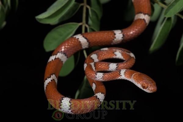 Biodiversity Group, DSC03883