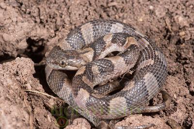 Biodiversity Group, DSC03599