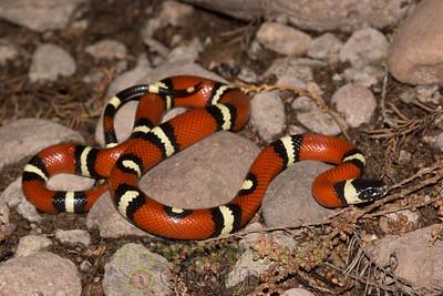 Biodiversity Group, DSC03439