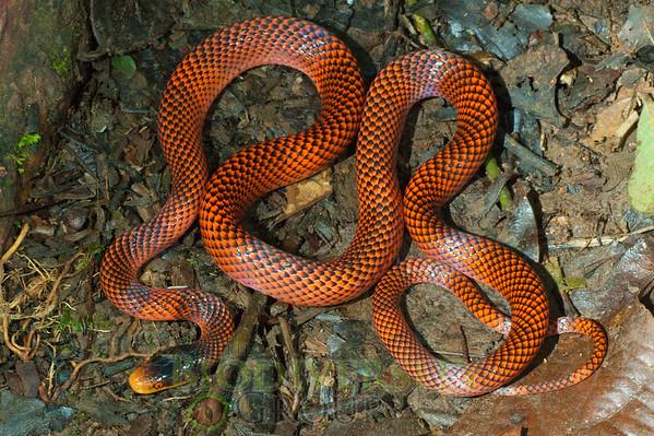 Biodiversity Group, _DSC9487