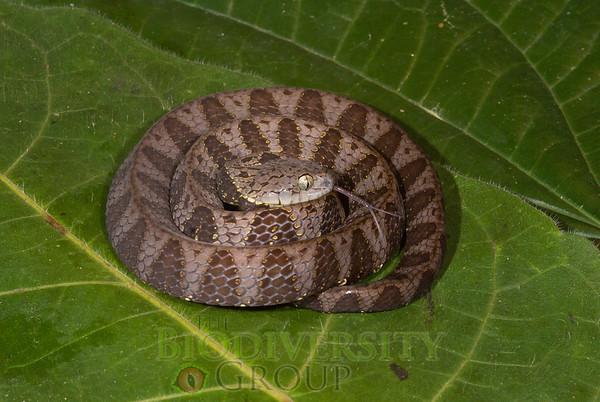 Biodiversity Group, _DSC9743