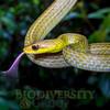 Biodiversity Group, _MG_0373