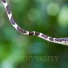 Biodiversity Group, _MG_0247
