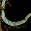 Biodiversity Group, _DSC8317