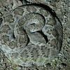 Biodiversity Group, _DSC6595