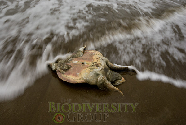 Biodiversity Group, _DSC1576