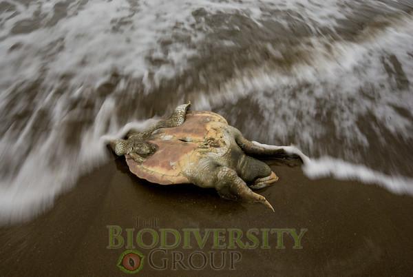 Biodiversity Group, _DSC1576