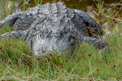 bprice reptiles-9