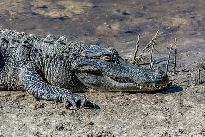 bprice reptiles-8