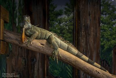 bprice reptiles-13