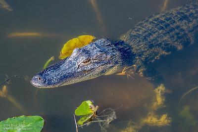 bprice reptiles-16