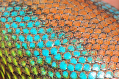Lizard Rainbow - Green Spiny Lizard