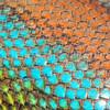 Lizard Rainbow - Green Spiny Lizard