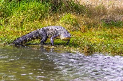 bprice reptiles-17