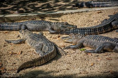 bprice reptiles-14